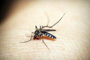 komar